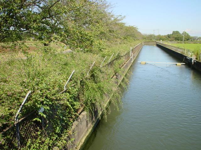 見沼代用水と緑のヘルシーロード